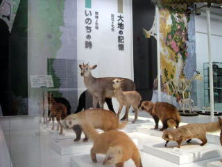 natural history exhibition hall
